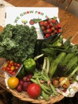 CSA Share Week 8: Sweet Corn, Romano Beans & Shallots, Kale, Onions, Grape Medley Tomatoes, Slicing Tomatoes, Green Peppers, Cucumbers, Potatoes, Japanese Eggplant, Strawberries