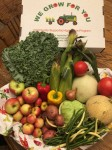 CSA Share Week 11: Sweet Corn, Cabbage, Kale, Italian Sweet Peppers, Potatoes, Honeydew Melon, Sugar Cube Melon, Green Beans/Shallots, Chestnut Crab Apples, Zestar! Apples, Slicing Tomatoes