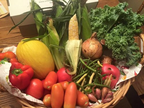 CSA Week 9: Sweet Corn, onions, green and wax beans, tomatoes, Roma tomatoes, heirloom tomato, kale, shallots, peppers, and canary melon!