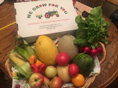 CSA Week 11: state fair sweet corn, tomatoes, yellow tomato, mini sweet peppers, Zestar apples, radishes, canary melon, shockwave melon, sugar cube melon, and personal size watermelon!