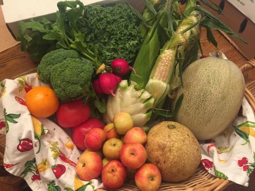 CSA Week 12: white sweet corn, shockwave melon, sugar cube melon, kale, broccoli, fennel, radishes, kale, red tomatoes, yellow tomato, and chestnut crab apples!