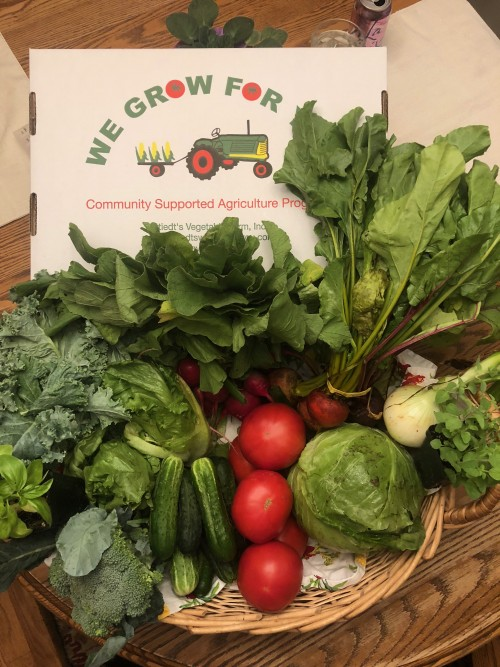 CSA Share Week 4: Chub Cucumbers, Onion, Radishes, Beets-mix of red and golden, Tomatoes, Cabbage, Broccoli, Lettuce, Kale, Herbs: Oregano and Dill