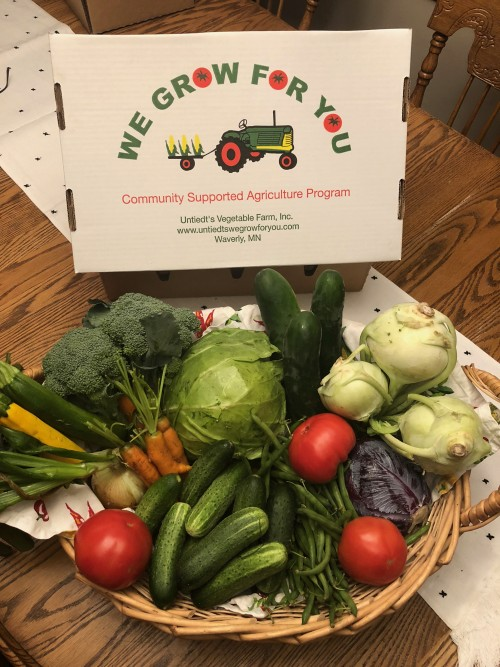 CSA Share Week 5: Green Beans, Chub Cucumbers, Onion, Slicing Cucumbers, Zucchini, Broccoli, Carrots, Kohlrabi, Red Cabbage, Green Cabbage, Tomatoes