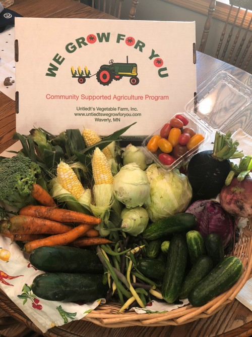 CSA Share Week 6: Sweet Corn, Broccoli, Green Cabbage, Red Cabbage, Beans: Green-Yellow- Purple, Chub Cucumbers, Grape Tomatoes, Kohlrabi, Black Radish, Watermelon Radish, Carrots, Cucumbers