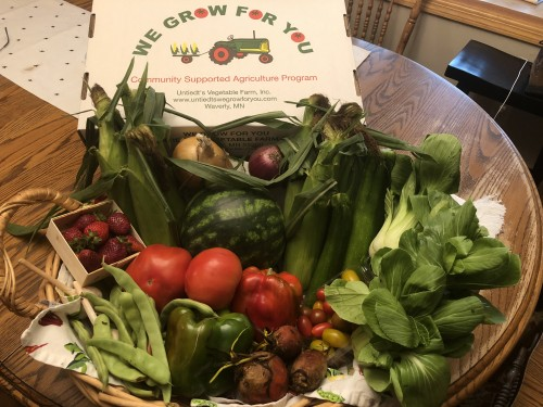 CSA Share Week 9: Sweet Corn, Baby Bok Choy, Romano Beans, Garlic, Shallots, Watermelon, Medley Grape Tomatoes, Slicing Tomatoes, Zucchini, Peppers, Onion, Beets, Strawberries
