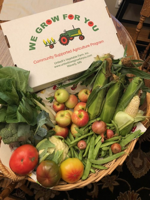 CSA Share Week 13: White Sweet Corn, Bok Choy, Cauliflower, Romano Beans & Shallots, Broccoli, Heirloom Tomatoes, Slicing Tomato, Zestar! Apples