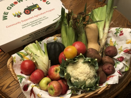 CSA Share Week 14: Sweet Corn, Honeycrisp Apples, Acorn Squash, Butternut Squash, Red Potatoes, Leeks, Fennel, Red Slicing Tomatoes, Heirloom Tomatoes, Cauliflower