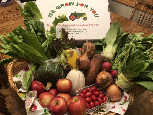 CSA Share Week 15: Romaine and Red Leaf Lettuce, SweeTango Apples, Spaghetti Squash, White Acorn Squash, Buttercup Squash, Radishes, Grape Tomatoes, Baby Bok Choy, Onions, Sweet Potatoes