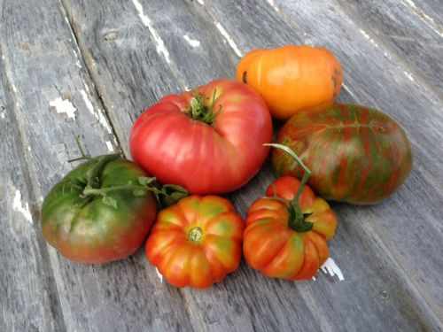 Heirloom Tomatoes- one of our best sellers!