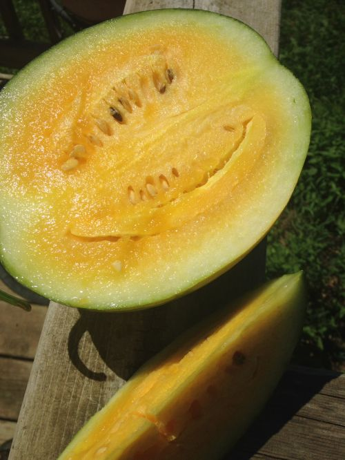 Yellow Watermelon!