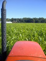 Sudan grass view from tractor.  We grow this to help build soil fertility