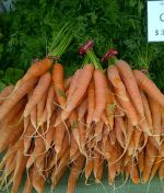Fresh late season carrots