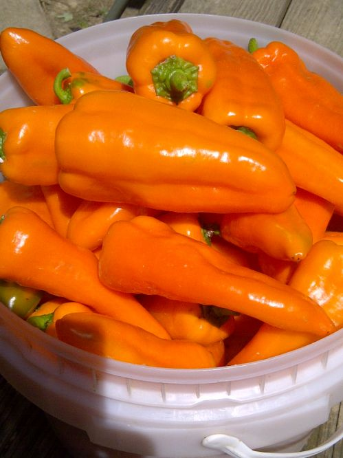 Oranos sweet peppers!