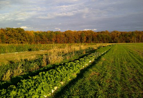 Fall colors highlight vegetables