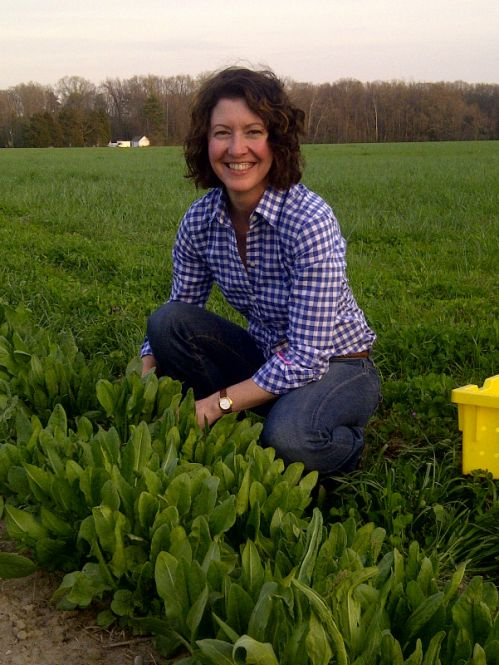 Farmer Jen harvesting French Sorrel