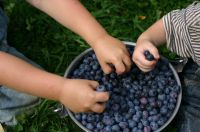 2017 Blueberry Picking Day for Children