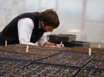Seeding in greenhouse