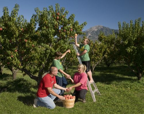Peach Picking with Tina, Don, Eric and Clay