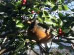 The Robin announces Spring is on the way