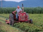 Ralph Styer (second generation) mowing our strawberry crop after the first year of harvest.