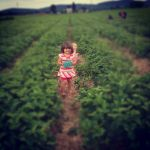Margot in strawberry heaven!