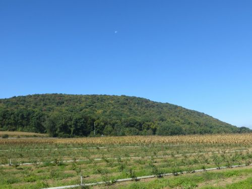 Just a view of the mountain behind our barn and the new blueberry field.