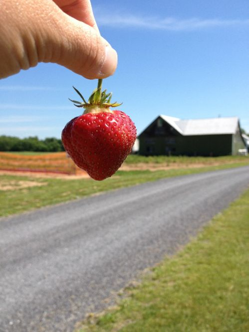 Now that is one BIG strawberry!