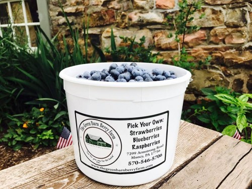 We recommend that you bring your own container to pick into or purchase a 5 quart bucket at the farm for $1 a piece.  It is then yours to take home and keep bringing back from year to year to pick into.