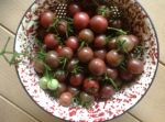 Chocolate cherry tomatoes 2013