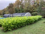 turmeric beds with fall color Oct 2020