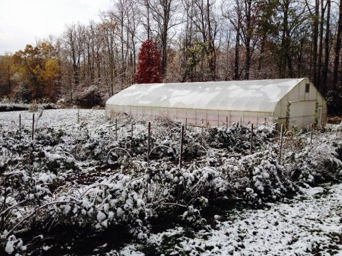 Hoophouse and raspberry rows after the Halloween Snow 2014