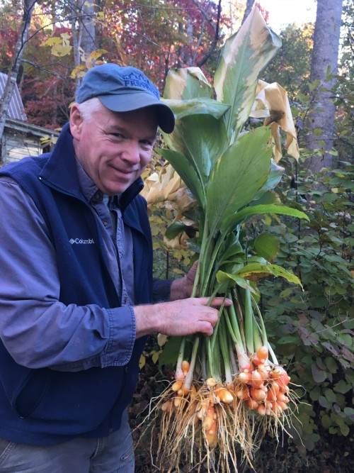John with first turmeric bunches