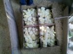 L&A broiler chicks arriving to the farm in their shipping boxes