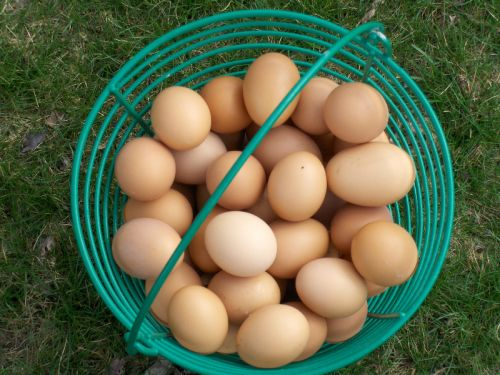A basket of L&A eggs