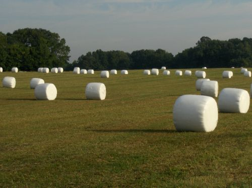 L&A silage bales in the field