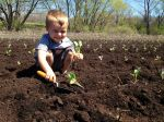 Noah Thorpe planting collard greens