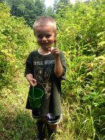 Noah picking raspberries