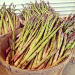 Our first picking of asparagus