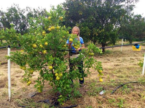 Gayle with one of our lemon trees