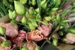 Rose and champagne lisianthus