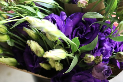 Brilliant purple lisianthus