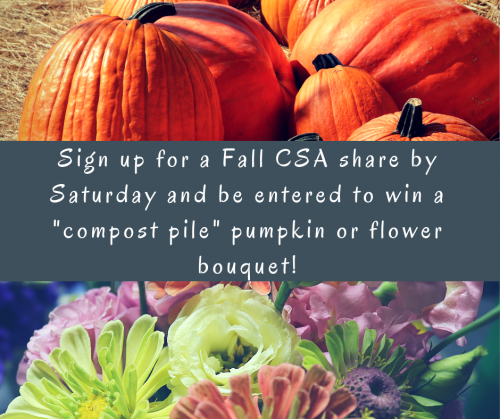Win a Free Pumpkin!