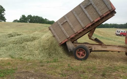 Dumping the rye straw into a windrow