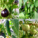 Peppers, tomatoes, aubergine