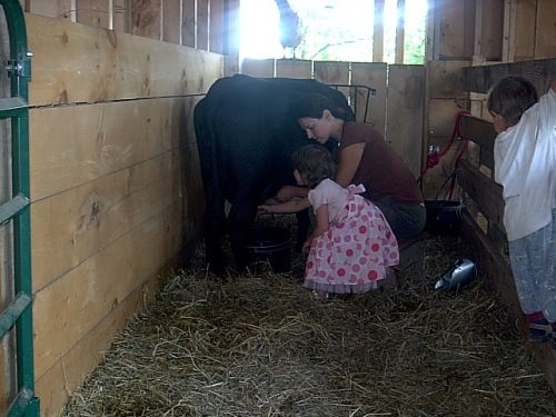 teaching milking