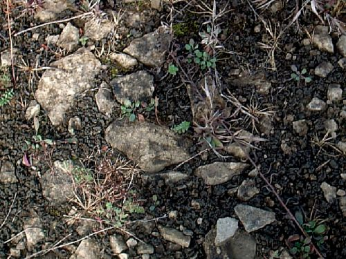 Rocky soil before animals