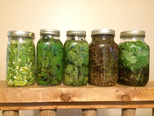 Tinctures in Process