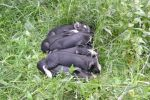 Newborns napping in the grass