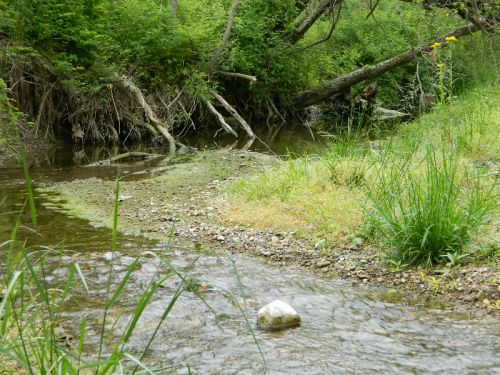 Nothing more peaceful than listening to the water rushing along the creek
