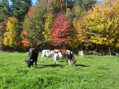 Heading into fall grazing color